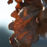 SIjoči list